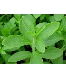 ΣΤΕΒΙΑ(Stevia rebaudiana) ΠΡΟΣΦΟΡΑ