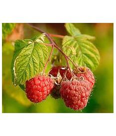 ΣΜΕΟΥΡΟ , RUBUS IDAEUS,raspberry σε γλαστρα τιμη